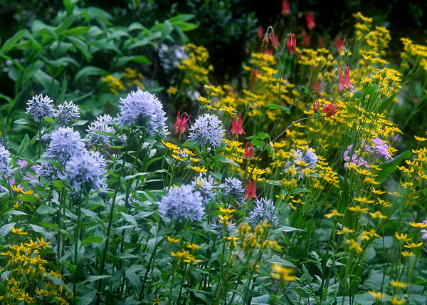 Designing Pollinator-Friendly Landscapes | Pollinator ... on native perennial garden, native wildflower garden, native plant garden, native bee habitat,